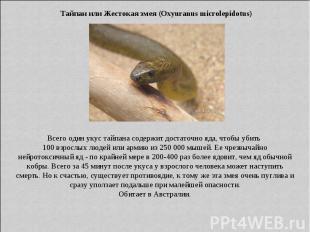 Тайпан или Жестокая змея (Oxyuranus microlepidotus) Всего один укус тайпана соде
