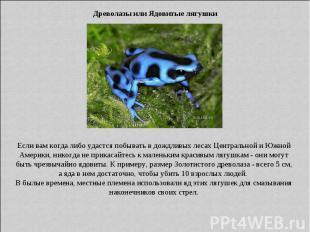 Древолазы или Ядовитые лягушки Если вам когда либо удастся побывать в дождливых