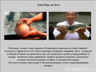 Рыба-Шар или Фугу Рыба-шар - второе самое ядовитое Позвоночное животное на земле