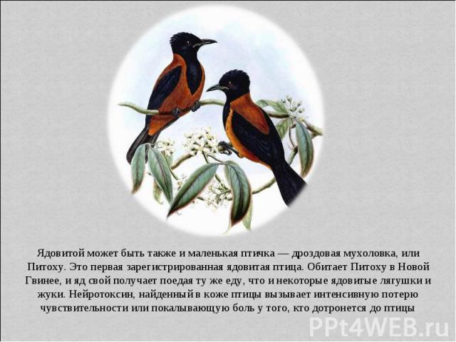 Ядовитой может быть также и маленькая птичка — дроздовая мухоловка, или Питоху. Это первая зарегистрированная ядовитая птица. Обитает Питоху в Новой Гвинее, и яд свой получает поедая ту же еду, что и некоторые ядовитые лягушки и жуки. Нейротоксин, н…