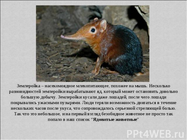 Землеройка – насекомоядное млекопитающее, похожее на мышь. Несколько разновидностей землеройки вырабатывают яд, который может остановить довольно большую добычу. Землеройки кусали даже лошадей, после чего лошади покрывались ужасными пузырями. Люди т…