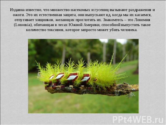 Издавна известно, что множество насекомых и гусениц вызывают раздражения и ожоги. Это их естественная защита, они выпускают яд, когда мы их касаемся, отпугивает хищников, желающих проглотить их. Знакомтесь – это Лономия (Lonomia), обитающая в лесах …