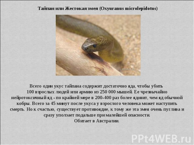 Тайпан или Жестокая змея (Oxyuranus microlepidotus) Всего один укус тайпана содержит достаточно яда, чтобы убить 100 взрослых людей или армию из 250 000 мышей. Ее чрезвычайно нейротоксичный яд - по крайней мере в 200-400 раз более ядовит, чем яд обы…