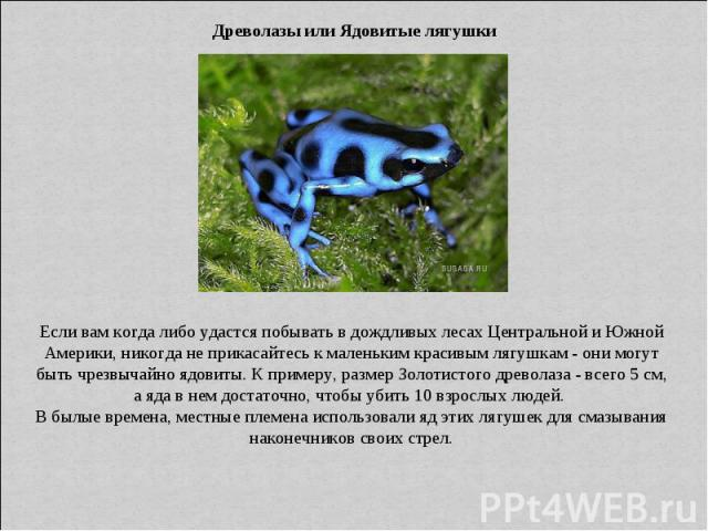 Древолазы или Ядовитые лягушки Если вам когда либо удастся побывать в дождливых лесах Центральной и Южной Америки, никогда не прикасайтесь к маленьким красивым лягушкам - они могут быть чрезвычайно ядовиты. К примеру, размер Золотистого древолаза - …