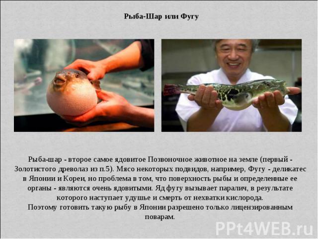 Рыба-Шар или Фугу Рыба-шар - второе самое ядовитое Позвоночное животное на земле (первый - Золотистого древолаз из п.5). Мясо некоторых подвидов, например, Фугу - деликатес в Японии и Кореи, но проблема в том, что поверхность рыбы и определенные ее …