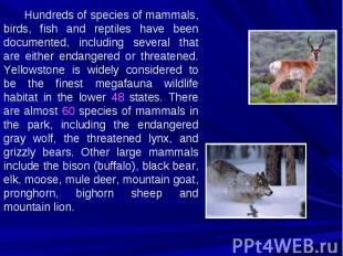 Hundreds of species of mammals, birds, fish and reptiles have been documented, i