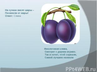 На сучках висят шары – Посинели от жары! Ответ: Слива Фиолетовая слива, Смотрит