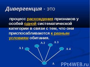Дивергенция - это процесс расхождения признаков у особей одной систематической к