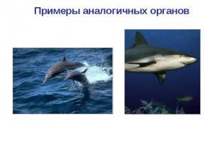 Примеры аналогичных органов Конечности дельфина Плавники рыбы