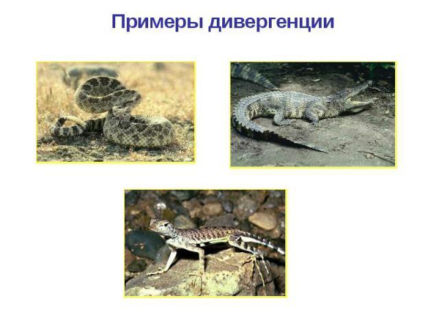 Примеры дивергенции Змея Крокодил Ящерица