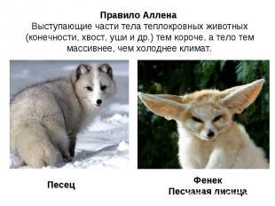 Правило Аллена Выступающие части тела теплокровных животных (конечности, хвост,