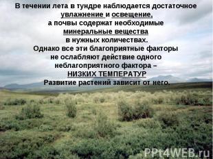 В течении лета в тундре наблюдается достаточное увлажнение и освещение, а почвы