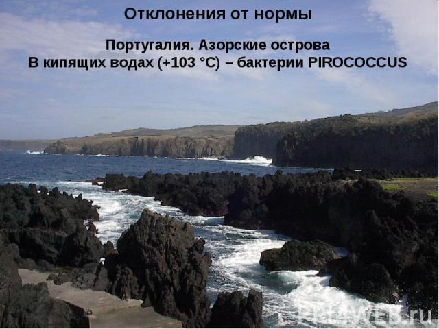 Отклонения от нормы Португалия. Азорские острова В кипящих водах (+103 °С) – бактерии PIROCOCCUS