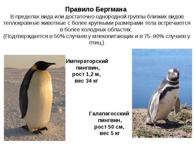 Правило Бергмана В пределах вида или достаточно однородной группы близких видов теплокровные животные с более крупными размерами тела встречаются в более холодных областях. (Подтверждается в 50% случаев у млекопитающих и в 75–90% случаев у птиц.) Им…