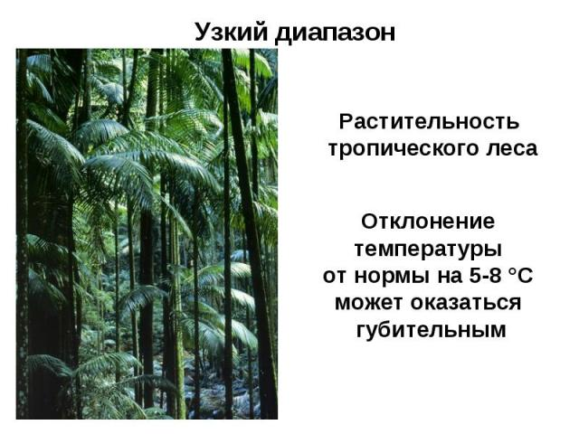 Узкий диапазон Растительность тропического леса Отклонение температуры от нормы на 5-8 °С может оказаться губительным