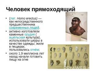Человек прямоходящий (лат.Homo erectus) —как непосредственного предшественника