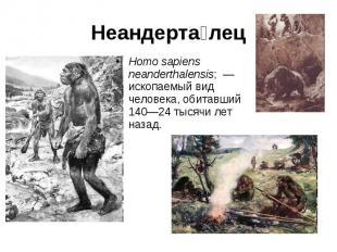 Неандерта лец Homo sapiens neanderthalensis; — ископаемый вид человека, обитавш
