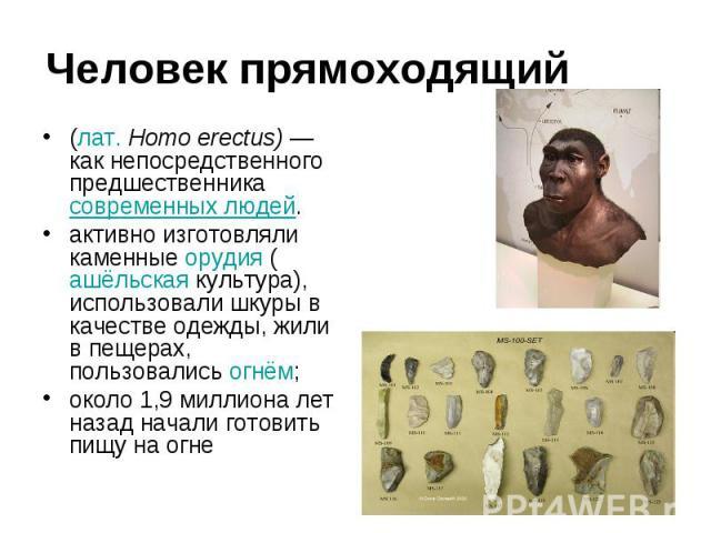 Человек прямоходящий (лат.Homo erectus) —как непосредственного предшественника современных людей. активно изготовляли каменные орудия (ашёльская культура), использовали шкуры в качестве одежды, жили в пещерах, пользовались огнём; около 1,9 миллиона…