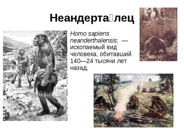 Неандерта лец Homo sapiens neanderthalensis; — ископаемый вид человека, обитавший 140—24 тысячи лет назад.