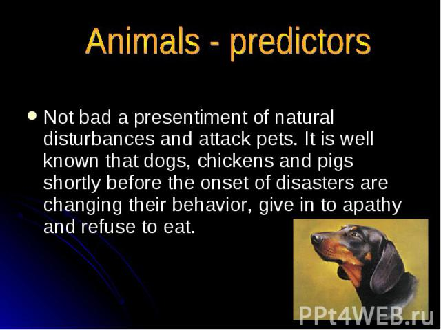 Animals - predictors Not bad a presentiment of natural disturbances and attack pets. It is well known that dogs, chickens and pigs shortly before the onset of disasters are changing their behavior, give in to apathy and refuse to eat.