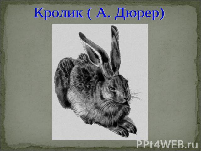 Кролик ( А. Дюрер)