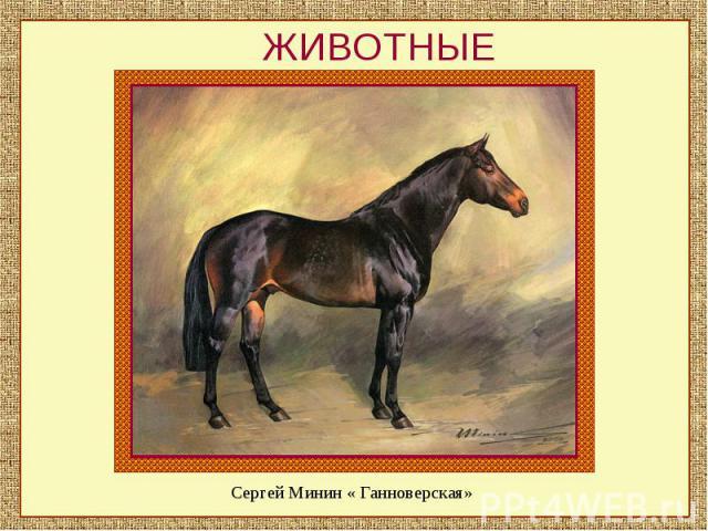 ЖИВОТНЫЕСергей Минин « Ганноверская»