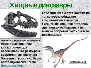 Хищные динозавры Строение их скелета похоже на то, которым обладают современные