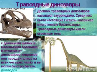 Травоядные динозавры Древних травоядных динозавров называют зауроподами. Среди н