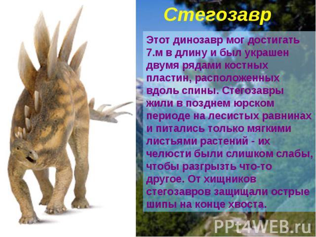 Стегозавр Этот динозавр мог достигать 7.м в длину и был украшен двумя рядами костных пластин, расположенных вдоль спины. Стегозавры жили в позднем юрском периоде на лесистых равнинах и питались только мягкими листьями растений - их челюсти были слиш…