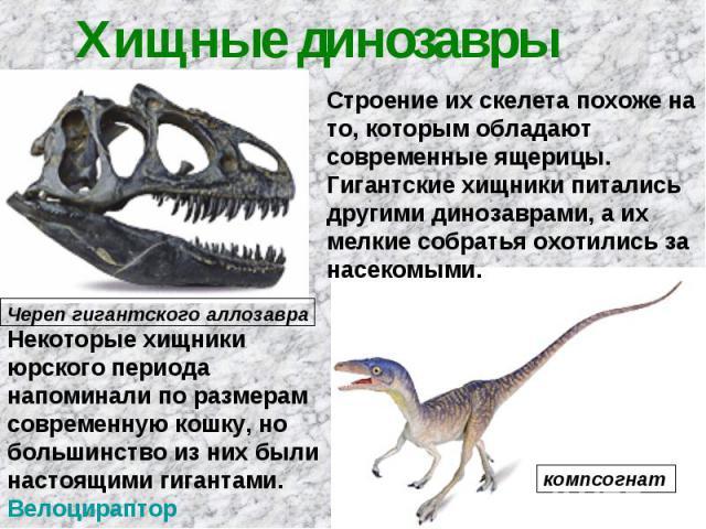 Хищные динозавры Строение их скелета похоже на то, которым обладают современные ящерицы. Гигантские хищники питались другими динозаврами, а их мелкие собратья охотились за насекомыми. Некоторые хищники юрского периода напоминали по размерам современ…