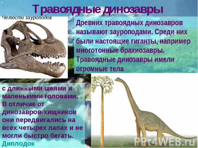 Травоядные динозавры Древних травоядных динозавров называют зауроподами. Среди них были настоящие гиганты, например многотонные брахиозавры. Травоядные динозавры имели огромные тела с длинными шеями и маленькими головами. В отличие от динозавров-хищ…