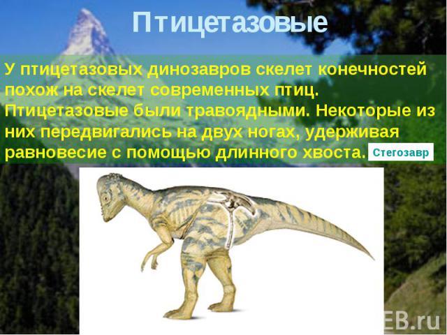 Птицетазовые У птицетазовых динозавров скелет конечностей похож на скелет современных птиц. Птицетазовые были травоядными. Некоторые из них передвигались на двух ногах, удерживая равновесие с помощью длинного хвоста.