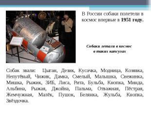 В России собаки полетели в космос впервые в 1951 году. Собаки летали в космос в