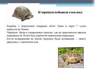 И черепахи побывали в космосе Корабль с черепахами совершил облёт Луны и через 7
