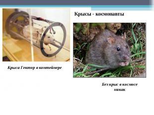 Крысы - космонавты Крыса Гектор в контейнере Без крыс в космосе никак