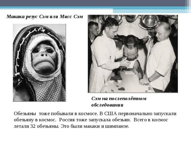 Макака резус Сэм или Мисс Сэм Сэм на послеполётном обследовании Обезьяны тоже побывали в космосе. В США первоначально запускали обезьяну в космос. Россия тоже запускала обезьян. Всего в космос летали 32 обезьяны. Это были макаки и шимпанзе.
