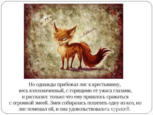 Но однажды прибежал лис к крестьянину, весь взлохмаченный, с горящими от ужаса глазами, и рассказал: только что ему пришлось сражаться с огромной змеей. Змея собиралась похитить одну из коз, но лис помешал ей, и она удовольствовалась курицей.