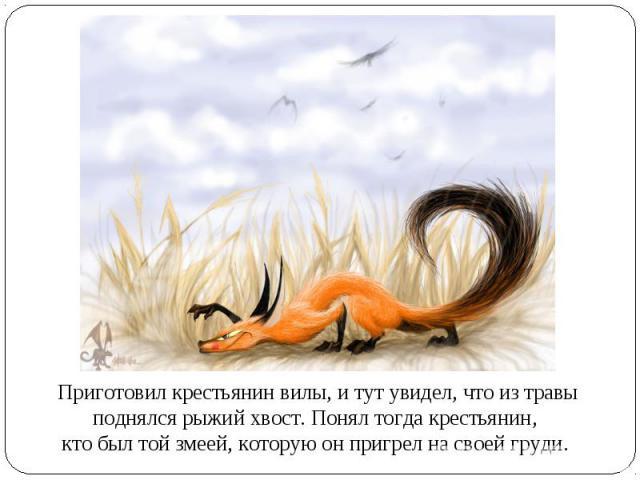 Приготовил крестьянин вилы, и тут увидел, что из травы поднялся рыжий хвост. Понял тогда крестьянин, кто был той змеей, которую он пригрел на своей груди.