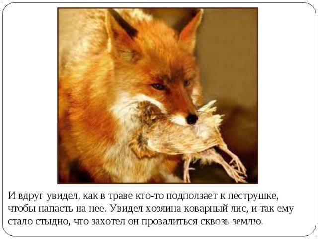 И вдруг увидел, как в траве кто-то подползает к пеструшке, чтобы напасть на нее. Увидел хозяина коварный лис, и так ему стало стыдно, что захотел он провалиться сквозь землю.