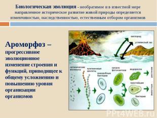 Биологическая эволюция - необратимое и в известной мере направленное историческо
