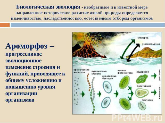 Биологическая эволюция - необратимое и в известной мере направленное историческое развитие живой природы определяется изменчивостью, наследственностью, естественным отбором организмовАроморфоз – прогрессивное эволюционное изменение строения и функци…