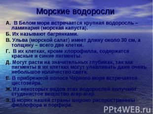 Морские водоросли А. В Белом море встречается крупная водоросль – ламинария (мор