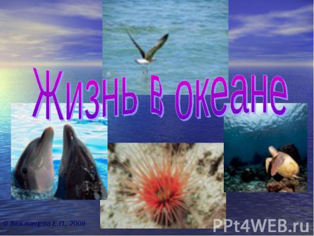 Жизнь в океане © Вежливцева Е.П., 2009