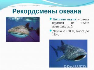 Рекордсмены океана Китовая акула – самая крупная из ныне живущих рыб. Длина 20-3