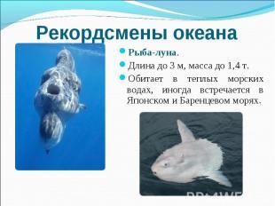 Рекордсмены океана Рыба-луна. Длина до 3 м, масса до 1,4 т. Обитает в теплых мор