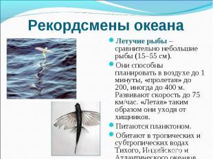 Рекордсмены океана Летучие рыбы – сравнительно небольшие рыбы (15–55 см). Они сп