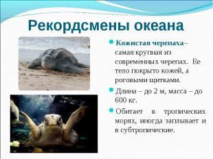 Рекордсмены океана Кожистая черепаха– самая крупная из современных черепах. Ее т