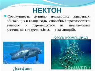 НЕКТОН Совокупность активно плавающих животных, обитающих в толще воды, способны