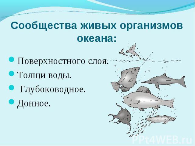 Сообщества живых организмов океана: Поверхностного слоя. Толщи воды. Глубоководное. Донное.