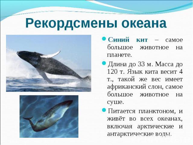 Рекордсмены океана Синий кит – самое большое животное на планете. Длина до 33 м. Масса до 120 т. Язык кита весит 4 т., такой же вес имеет африканский слон, самое большое животное на суше. Питается планктоном, и живёт во всех океанах, включая арктиче…